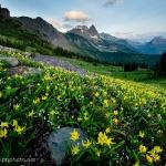 Queneau_wildflowers-1120
