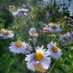 Queneau_wildflowers-1158
