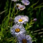 Queneau_wildflowers-5317