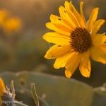 Queneau_wildflowers-6311