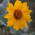 Queneau_wildflowers-6443
