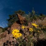 Queneau_wildflowers-9712